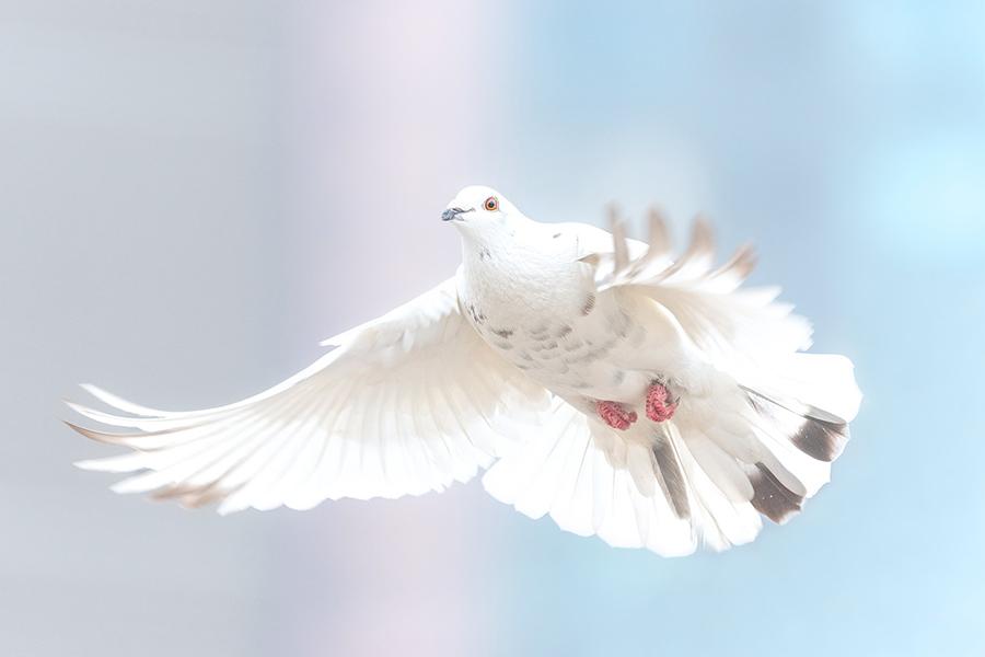Die Taube als Symbol für die Heiligen Geist